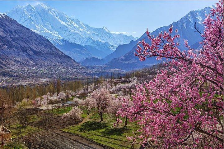 spring cherry blossom tour hunza valley nagar valley hunza nagar apricot blossom tour
